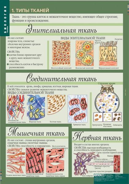 таблица по биологии одноклеточные